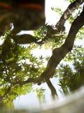 Grün lässt das Reflektieren im Wasser, flachen Fokus Lizenzfreie Stockfotografie