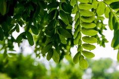 Grün lässt das Wachsen in der Sommerzeit Stockfotos