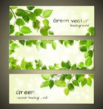 Grün lässt Fahnen Stockfotografie