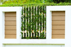 Grün lässt Farne auf der Wand, alte Wände mit Natur Beschaffenheit oder Hintergrund für Darstellungspapier Lizenzfreie Stockfotografie