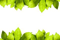 Grün lässt Feld getrennt auf weißem Hintergrund Lizenzfreies Stockfoto