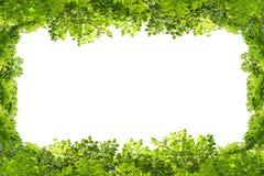 Grün lässt Feld getrennt auf weißem Hintergrund Lizenzfreie Stockfotografie
