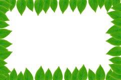 Grün lässt Feld mit weißem Hintergrund Lizenzfreies Stockbild