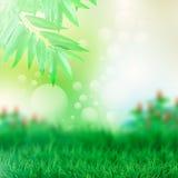 Grün lässt Garten abstrakten Hintergrund Stockbild