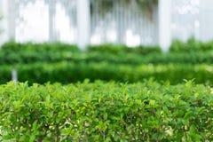 Grün lässt Hintergrund Stockbilder
