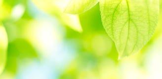 Grün lässt Hintergrund Stockfoto