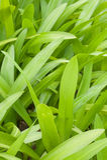 Grün lässt Hintergrund stockfotos