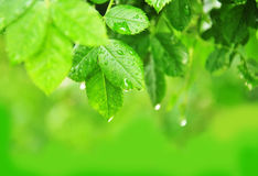 Grün lässt Hintergrund Lizenzfreies Stockbild