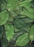 Grün lässt Hintergrund Lizenzfreie Stockbilder
