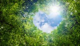 Grün lässt Hintergrund, Herzformwolkenökologiekonzeptidee eco Liebessymbol-Hintergrundzusammenfassung des blauen Himmels stockfoto