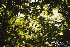 Grün lässt Hintergrund im sonnigen Tag Stockfotografie