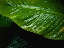 Grün lässt Hintergrundbeschaffenheit Stockbilder
