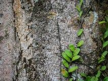 Grün lässt Hintergrundbeschaffenheit Stockfotos