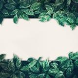 Grün lässt Hintergrunddesign mit Weißbuch stockbilder