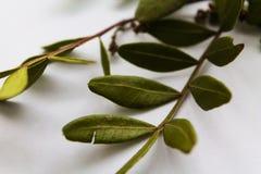 Grün lässt Klima lizenzfreies stockbild
