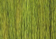 Grün lässt Muster Lizenzfreie Stockfotografie