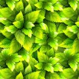 Grün lässt Muster Lizenzfreies Stockfoto