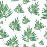 Grün lässt Muster Stockfotografie