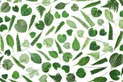 Grün lässt Muster lokalisiert auf Draufsicht des weißen Hintergrundes Flaches Lageanreden lizenzfreie stockfotografie