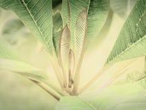 Grün lässt Musterhintergrund Nahaufnahme tropisches Makro der Natur stockfotografie