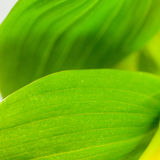 Grün lässt Nahaufnahme Stockfotos