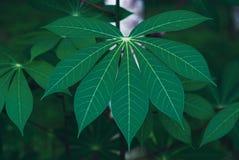 Grün lässt neuen Naturhintergrund Stockfoto