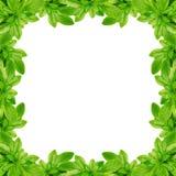 Grün lässt Rahmen lizenzfreie stockbilder