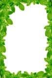 Grün lässt Rahmen Lizenzfreies Stockbild
