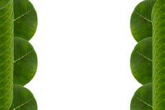 Grün lässt Rahmen Lizenzfreies Stockfoto