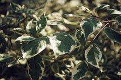 Grün lässt Sonnenlicht Garten bokeh Hintergrund im Freien Lizenzfreie Stockfotografie