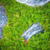 Grün lässt umgebende kleine Felsen stockbild