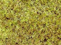 Grün lässt Zaunhintergrund Stockfotografie