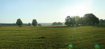 Grün leeren Sie Feld mit Bäumen und Blendenfleck Stockbild