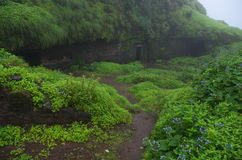 Grün nahe Höhlen Stockfotografie