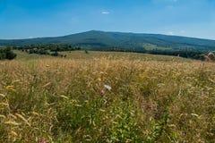 Grün neigt sich überwuchert mit Gras auf einem Hintergrund von Bergen unter einem blauen Himmel lizenzfreie stockfotografie