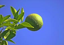 Grün-Orange gegen einen blauen Himmel Lizenzfreies Stockbild