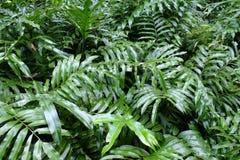 Grün pflanzen Lizenzfreies Stockfoto