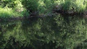 Grün reflektierte Teich-Oberfläche stock video footage