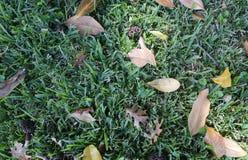 Grün-Schnitt-Gras Backgroung mit Blättern Stockfoto
