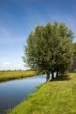 Grün stellt nahe Amsterdam, die Niederlande auf stockbilder