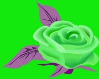 Grün stieg Lizenzfreie Stockbilder