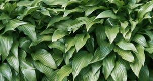 Grün treibt Hintergrund Blätter Stockfoto