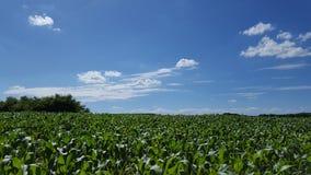Grün und Blau Lizenzfreie Stockfotografie