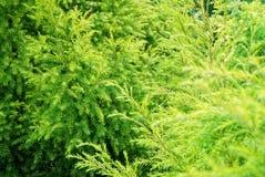Grün und frisches Lizenzfreies Stockbild