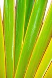 Grün und gelb mit Rot umrandet Nahaufnahme Stockbild
