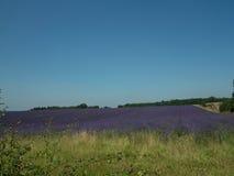 Grün und Lavendel Stockbild