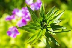 Grün und Positiv Lizenzfreie Stockfotografie