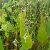 Grün und Purpur lizenzfreies stockbild