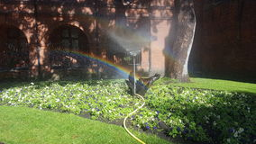 Grün und Regenbogen Stockfotografie