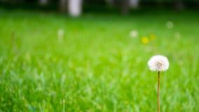 Grün und Weiß Stockfotos
